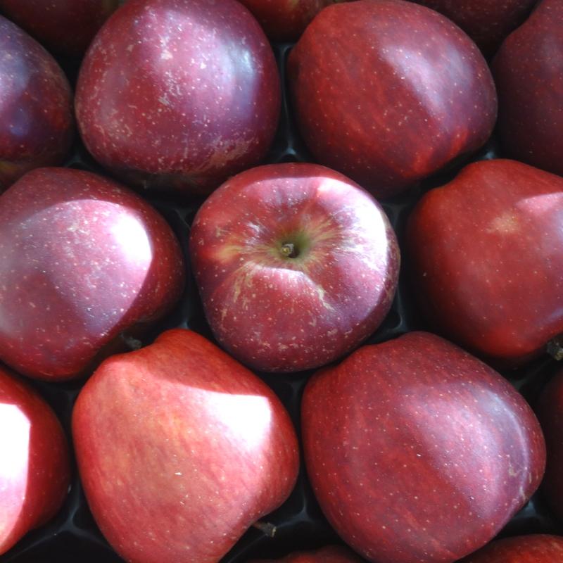 Quelle vari t de pomme pour quelle recette coop paysanne - Variete de pommier rustique ...